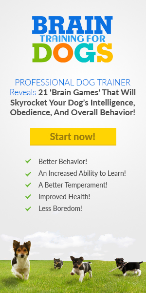 brain training dogs