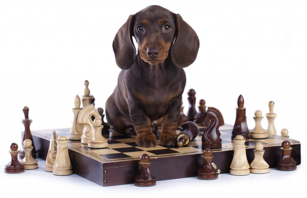 Professional Dog Trainer Reveals 21 Simple Games